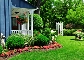 Create a lush, beautiful lawn